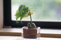 観葉植物.jpg